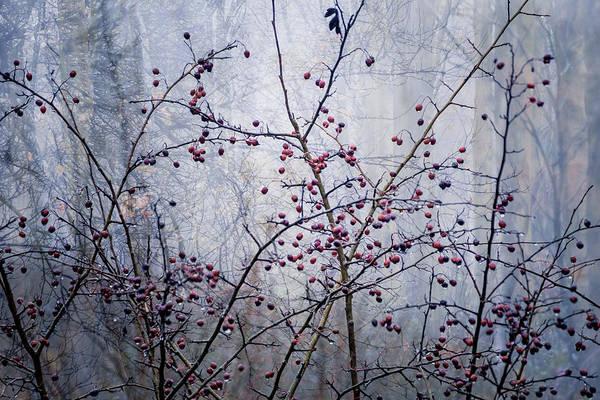 Photograph - Woodland Berries by Glenys Garnett