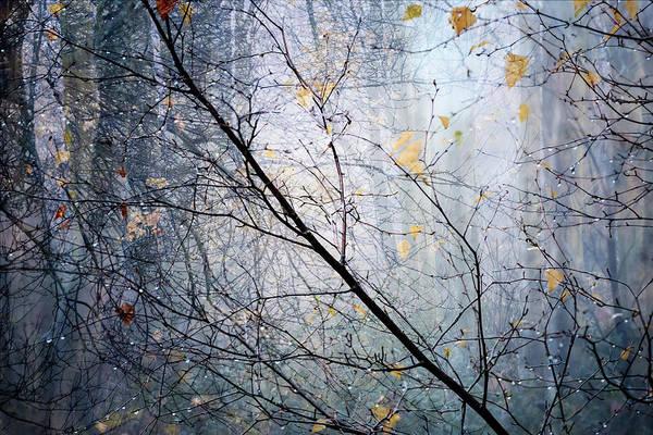 Photograph - Woodland Dark by Glenys Garnett