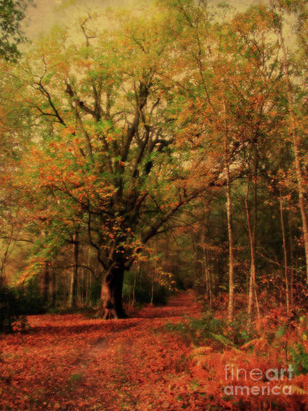 Kings Lynn Wall Art - Photograph - Woodland Path, Sandringham  by John Edwards