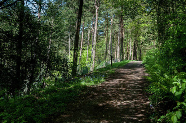 Photograph - Woodland Pathway by Helen Northcott