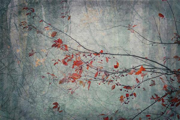 Photograph - Woodland Red by Glenys Garnett