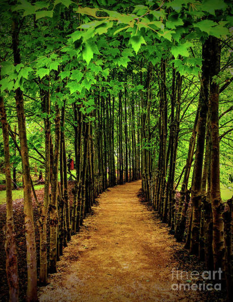 Photograph - Woodland Trail In Hamilton by Nick Zelinsky