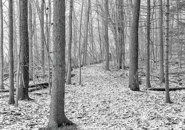 Photograph - Woodland Trail by Rod Best