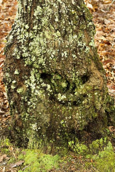 Troll Photograph - Woodland Troll Smiling by Douglas Barnett