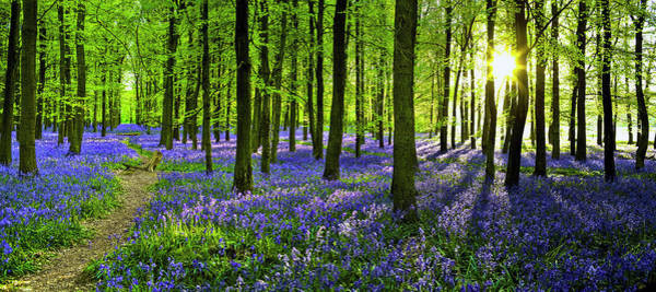 Wall Art - Photograph - Woodland With Carpet Of Bluebells by Doug Armand