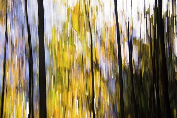 Photograph - Woods In Autumn by Yulia Kazansky