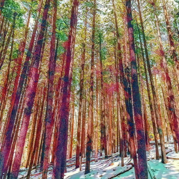 Wall Art - Photograph - Woods In Watercolors by Eric Glaser