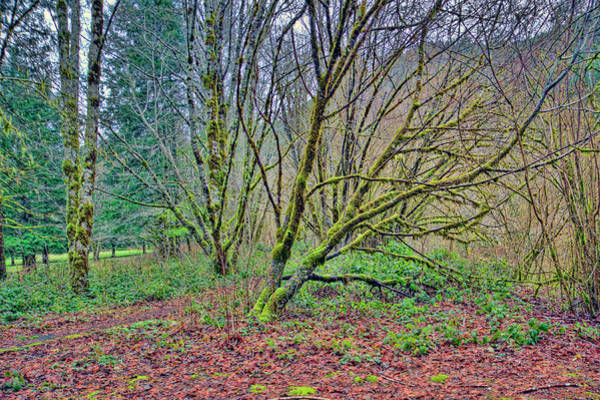 Camera Raw Photograph - Woods Near Waldport Oregon by Brenton Cooper