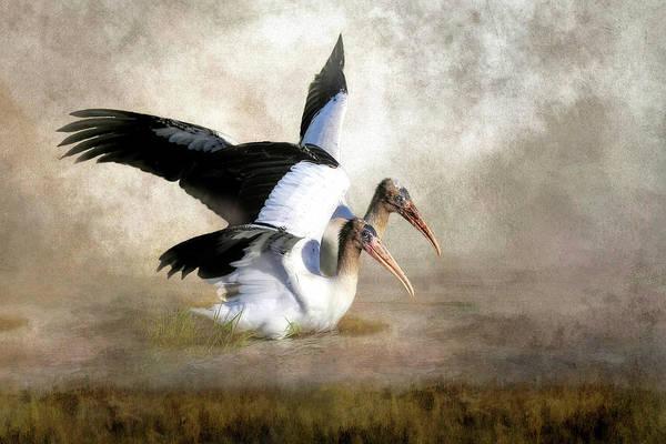 Wood Stork Siblings In The Marsh Art Print
