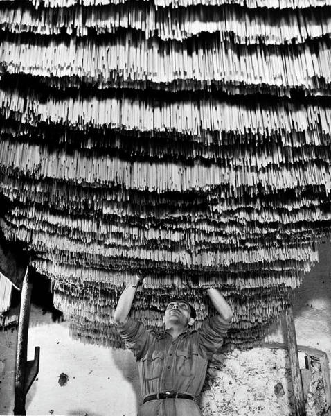 Wall Art - Photograph - Worker At Pasta Factory Inspecting by Alfred Eisenstaedt