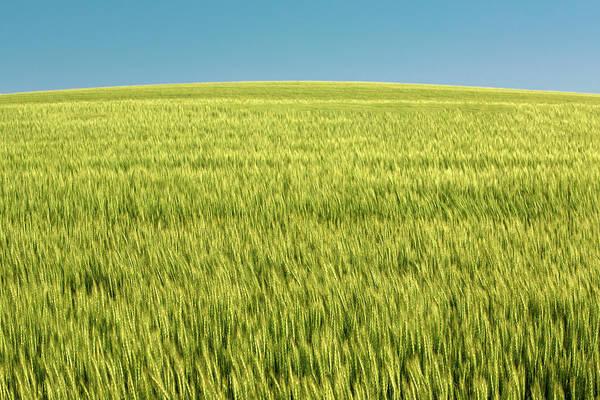 Wall Art - Photograph - World Of Wheat by Todd Klassy