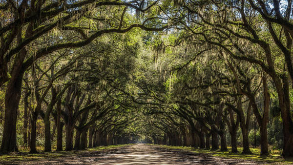 Photograph - Wormsloe Oak Alley by Framing Places