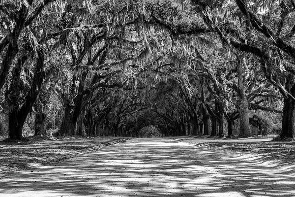 Photograph - Wormsloe Plantation Black And White by Dan Sproul