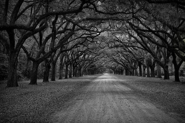 Photograph - Wormsloe Plantation Trees by Jon Glaser