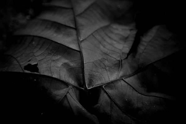 Photograph - Worn Leaf by Eric Christopher Jackson