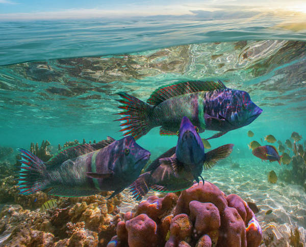 Wall Art - Photograph - Wrasse And Coral, Ningaloo Reef by Tim Fitzharris