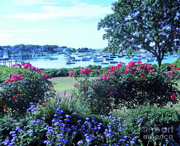 Wall Art - Photograph - Wychmere Harbor Blooms by Sharon Williams Eng