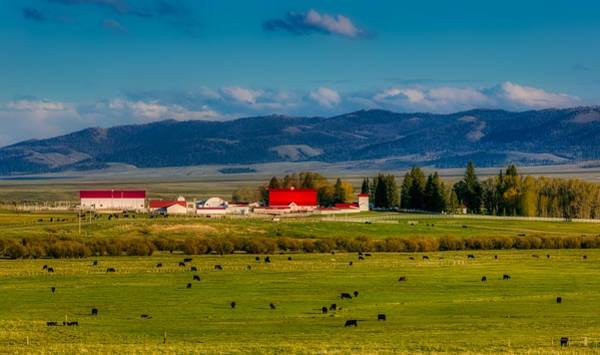 Wall Art - Photograph - Wyoming Cattle Ranch by Mountain Dreams