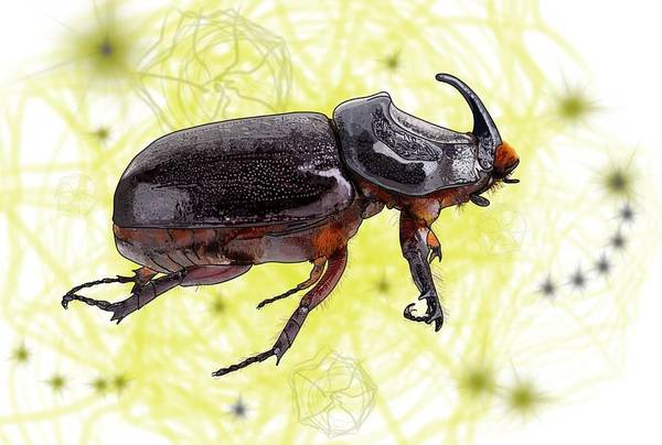 Drawing - X Is For Xylotrupes Ulysses  Aka Rhinoceros Beetle by Joan Stratton