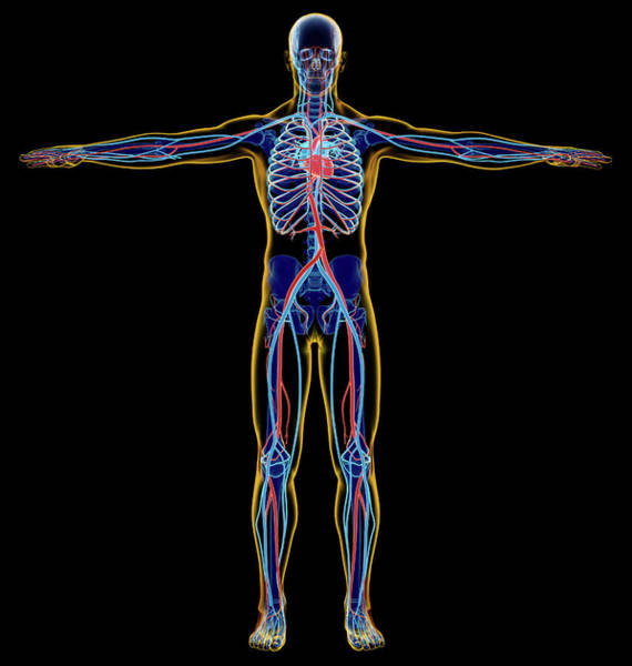 Wall Art - Photograph - X-ray Effect Of Male Skeletal by Leonello Calvetti