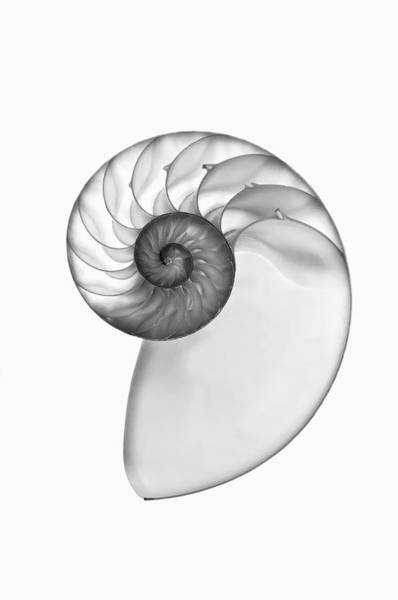 Wall Art - Photograph - X Ray Of A Nautilus Shell Cross Section by Mike Hill
