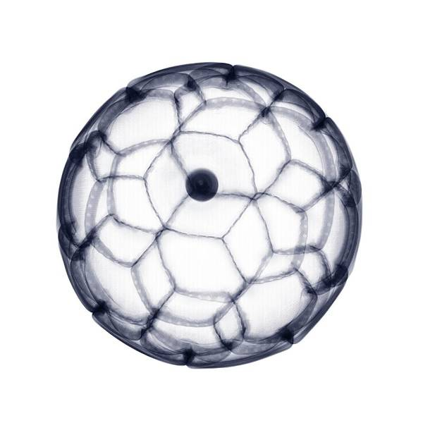 Photograph - X-ray Of Leather Football by Nick Veasey