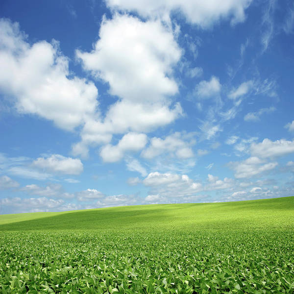 Cultivate Photograph - Xxxl Bright Soybean Field by Sharply done