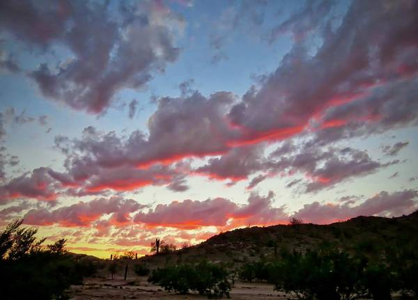 Photograph - Y Cactus Sunset  11 by Judy Kennedy