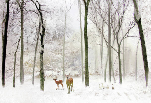Wall Art - Photograph - Forest Winter Visitors by Jessica Jenney