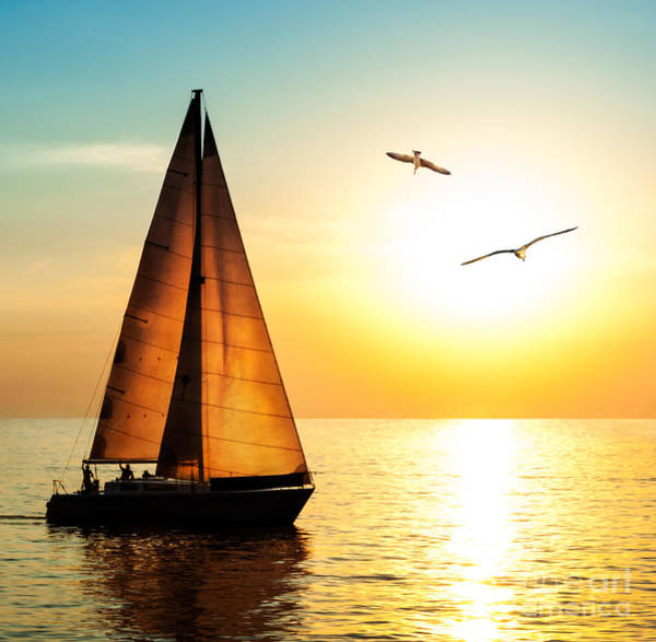 Wall Art - Photograph - Yacht Sailing Against Sunset. Holiday by Repina Valeriya
