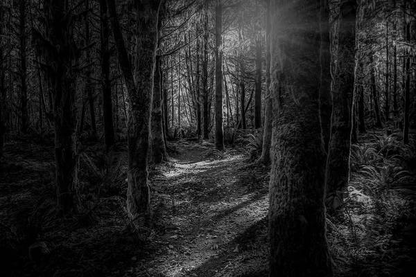 Photograph - Yakonaart1 by Bill Posner
