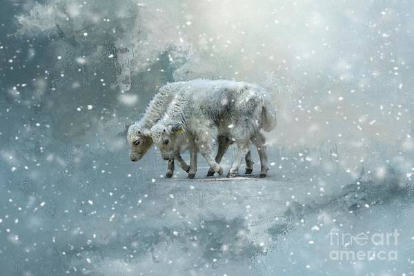 Yaks Calves In A Snowstorm Art Print