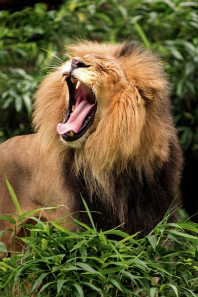 Photograph - Yawning by Don Johnson