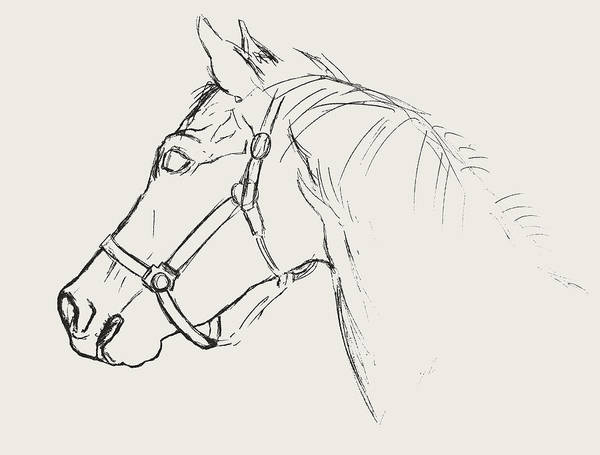 Yearling White Art Print