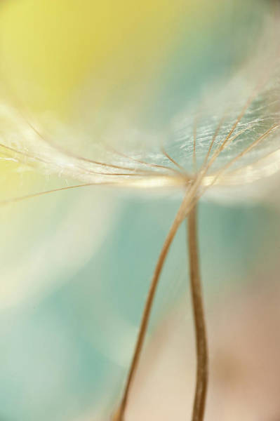 Wall Art - Photograph - Yellow And Green Dandelions by Iris Greenwell