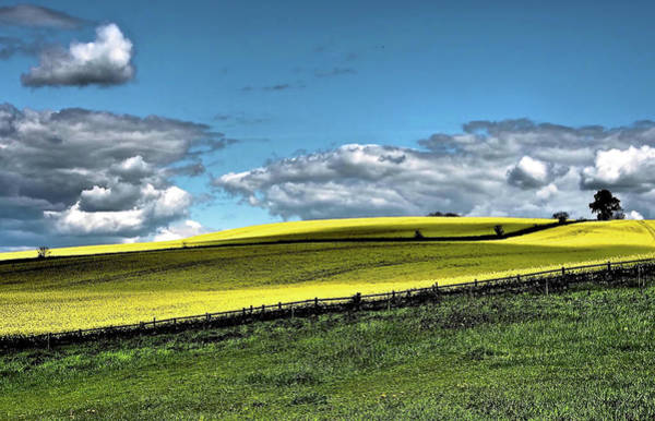 Nottinghamshire Photograph - Yellow And Green Field by Flick's Pix
