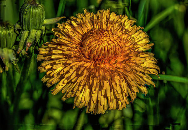 Photograph - Yellow And Orange On Dark Green #i7 by Leif Sohlman