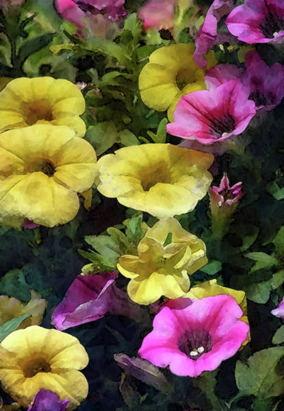 Photograph - Yellow And Pink Petunias 6536 Idp_2 by Steven Ward