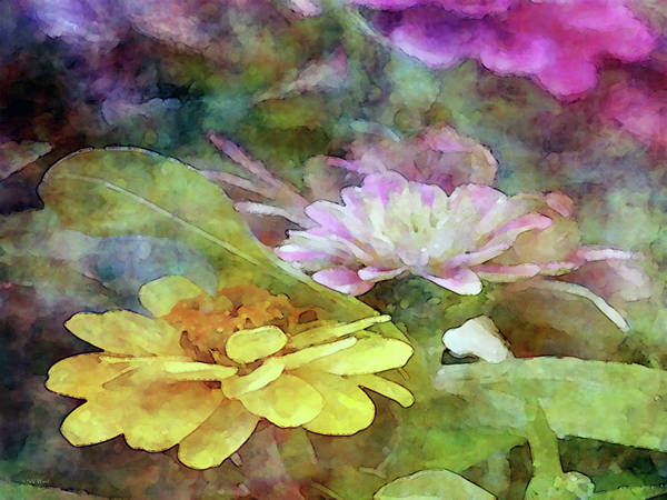 Photograph - Yellow And Pink Zinnia 1305 Idp_2 by Steven Ward
