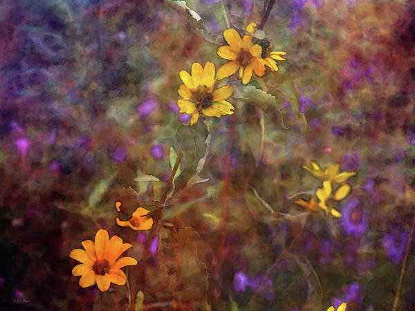 Photograph - Yellow And Purple Gems 5697 Idp_2 by Steven Ward