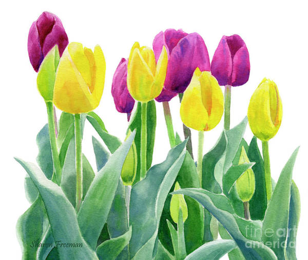 Violet Painting - Yellow And Violet Tulips Horizontal Design by Sharon Freeman
