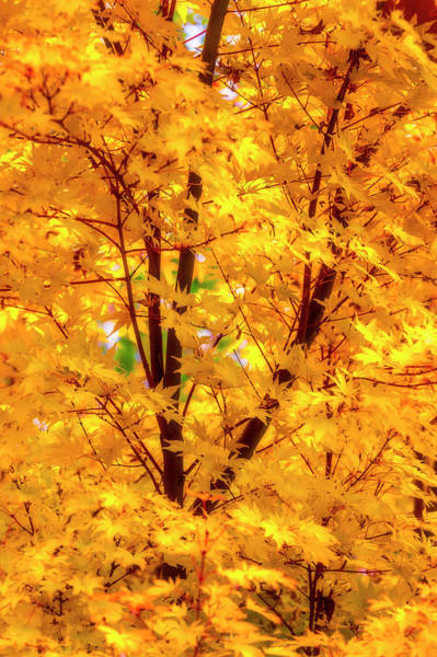 Wall Art - Photograph - Yellow Autumn Leaves by Garry Gay