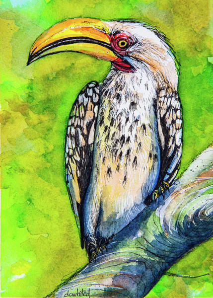 Hornbill Painting - Yellow-billed Hornbill by Dave Whited