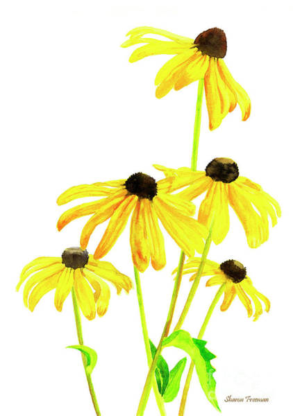 Freeman Wall Art - Painting - Yellow Black Eyed Susans by Sharon Freeman