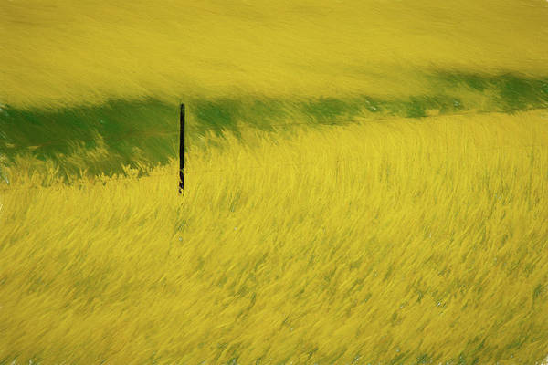 Photograph - Yellow Bloom Of Flowers In Prairie Paintography by Dan Friend
