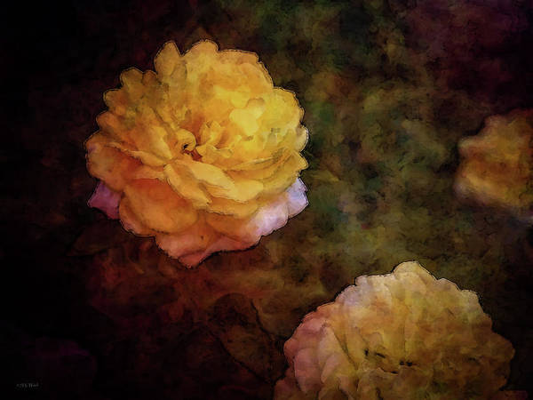 Photograph - Yellow Bounty 4682 Idp_2 by Steven Ward
