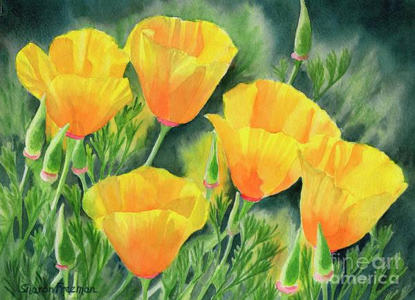 Wall Art - Painting - Yellow California Poppies by Sharon Freeman