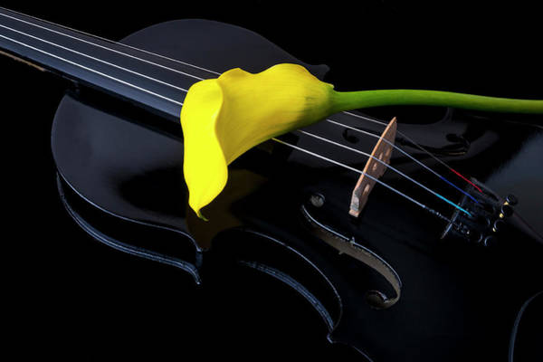 Photograph - Yellow Calla Lily And Black Violin by Garry Gay