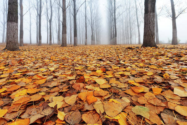 Wall Art - Photograph - Yellow Carpet by Evgeni Dinev