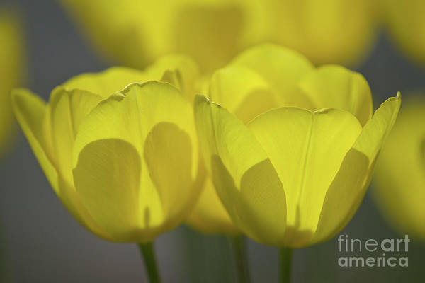 Photograph - Yellow by Craig Leaper